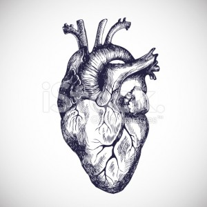 stock-illustration-30213914-human-heart-