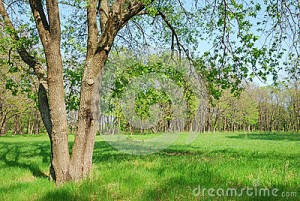 plantation-de-chne-24874520