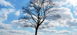 أيّتها الشّجرة : شعر : مختار العمراوي – ماطر – تونس