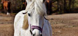 يقظةُ حصانٍ : شعر: عبد العزيز الحيدر – بغداد – العراق