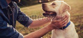 Le chien qui brait par :Mohamed Bouhouch – Tozeur – Tunisie