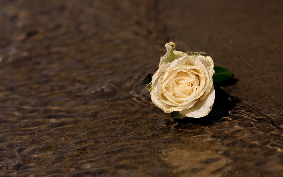 Rose Des Sables Par Fatima Maaouia Poete Tuniso Algerienne