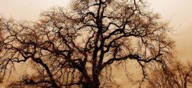 La  forêt de Walou :Mini nouvelle d'Ahmed Khettaoui- Blida – Algérie