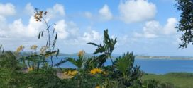 L'année s'achève par: Jocelyne Mouriesse – La Martinique